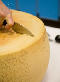 Cutting into a ripe wheel of Grana Padano PDO