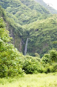 The deep lush forests of the Tahitian Papenoo Valley