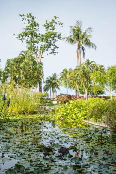 Gardens at Le Meridien Tahiti