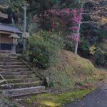 『つぶらな瞳』春日神社