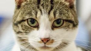 Katzen richtig füttern - Die Katzenernährung