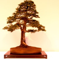 Bonsai Demos and Events