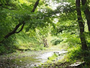 埼玉県飯能市 川釣り体験