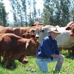 Bernie English, FutureBeef Senior Extension Officer, Department of Agriculture and Fisheries, Mareeba, Queensland