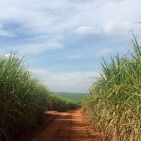 Bunge, BP merge Brazil operations to create world's No 3 sugarcane processor