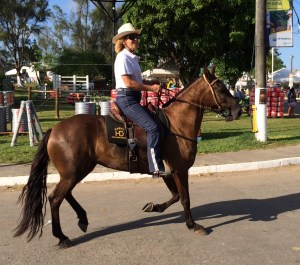 Reserve champion mare at the CBM in Bahia - marcha picada