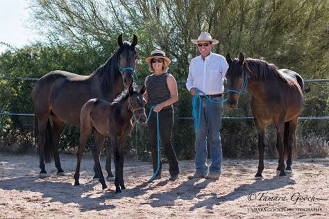 3 generations of Marchador mares at Summerwind.   Brisa Libertas with John, daughter Brasilia do Summerwind and granddaughter Jewel do Summerwind with Lynn