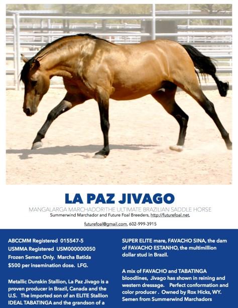 jivago stallion ad 2017
