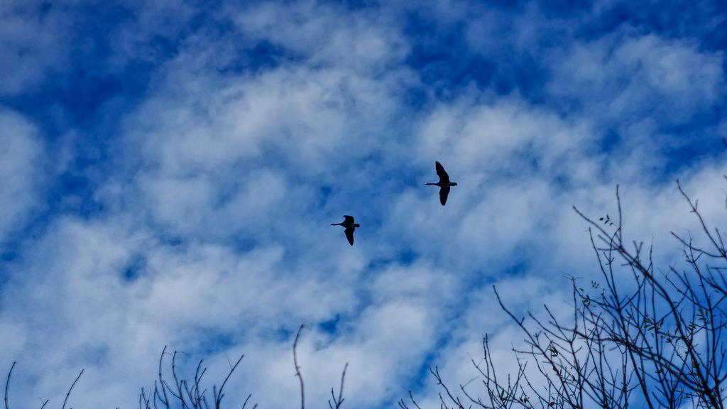 Photo of two birds flying in the sky