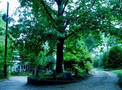 Şu hayatta bir dikili ağacı olan tek ağaç!