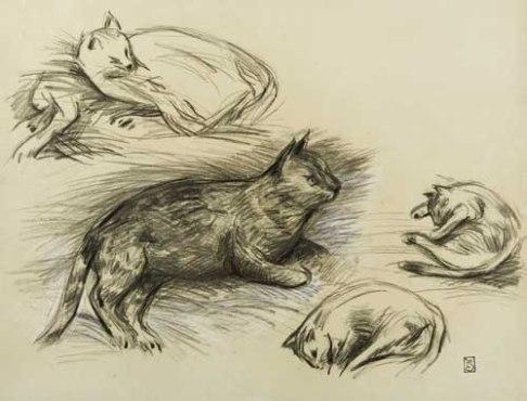 Etude des Chats