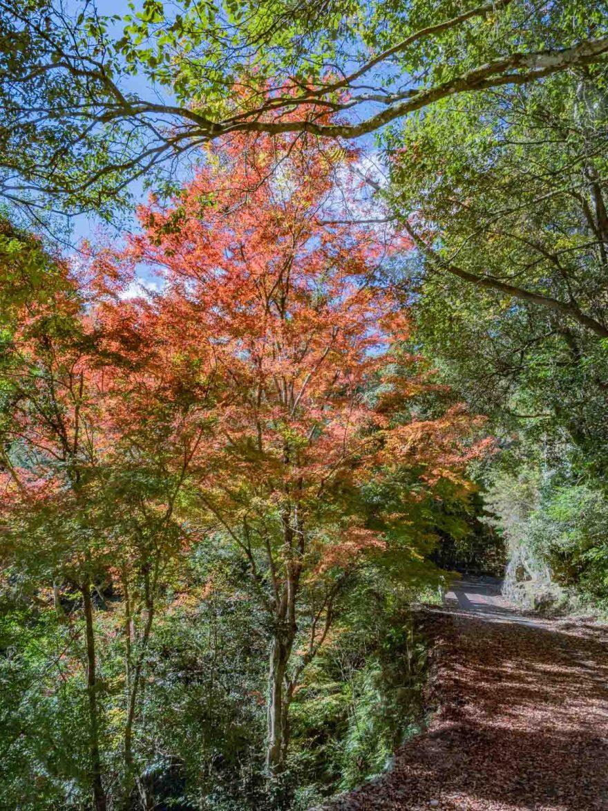 血洗の滝・血洗滝神社:向かう道