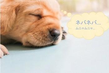 00_イヌ_寝る01