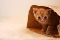 猫が抜け毛で作った毛玉ボールを食べる!?対処や食べにくい大きさは?