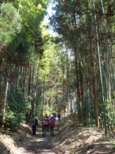 帰途の竹林