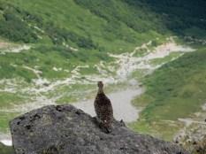 中岳で雷鳥と遭遇
