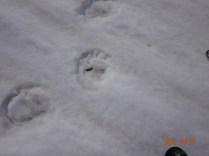 熊?の足跡