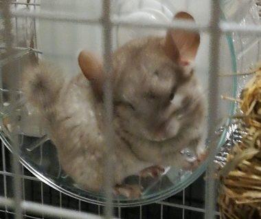 nanaoeyecatch