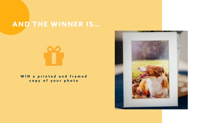 Win competition framed pet photo