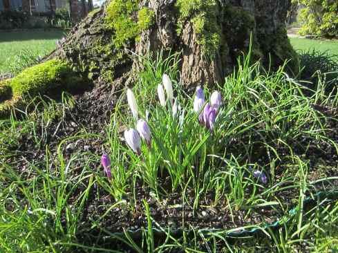 Spring 14Mar
