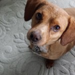 Surrey Langley dog boarding pet sitting