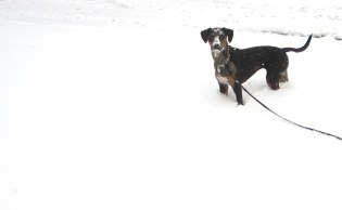 Zamba enjoys a romp in the snow.