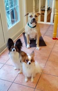 Surrey dog boarding