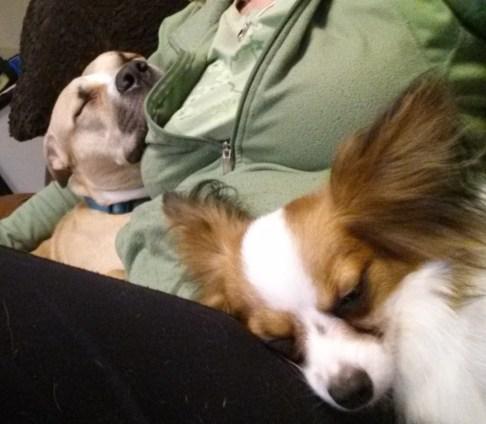 FuzzyBuddyBC Snoringdogs