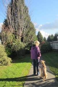 Surrey Dog Walking