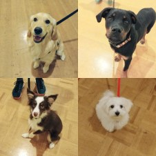 Puppies in puppy class