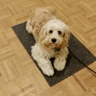 Puppy on his mat
