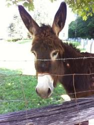 My friend the donkey