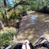 fuzzygalore pine barrens puddle