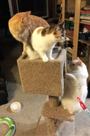 Three cats on cube tree 2016-04-13 23.31.59