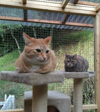Praline and Walnut in catio 2016-06-18 20.39.38