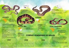 Primeiro pôster encartado com NOVA ESCOLA falava sobre as Cobras Venenosas do Brasil, uma parceria da revista com o Ministério da Saúde