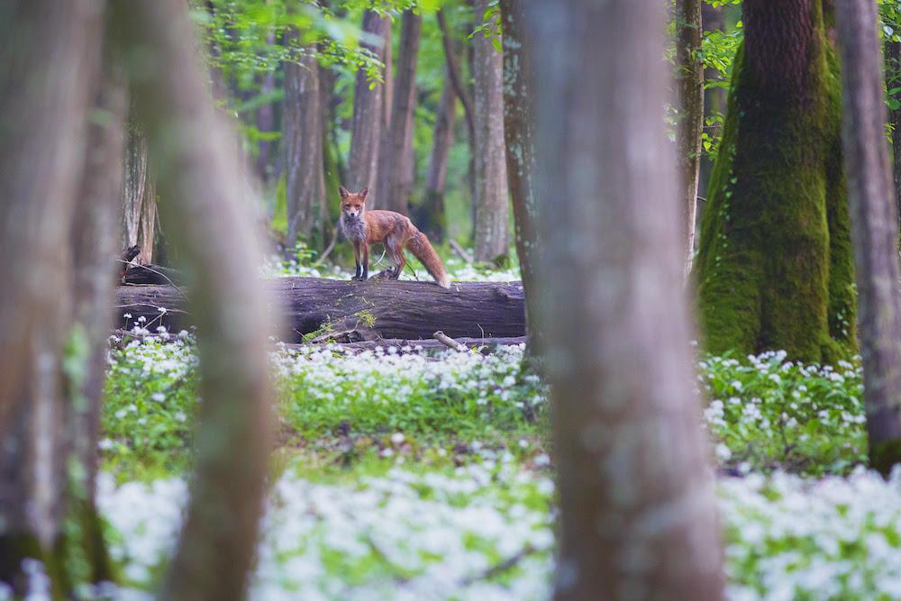 Ecco le più belle foreste d'Italia: PEFC premia i vincitori del concorso fotografico 2020. Il Friuli è ben rappresentato!