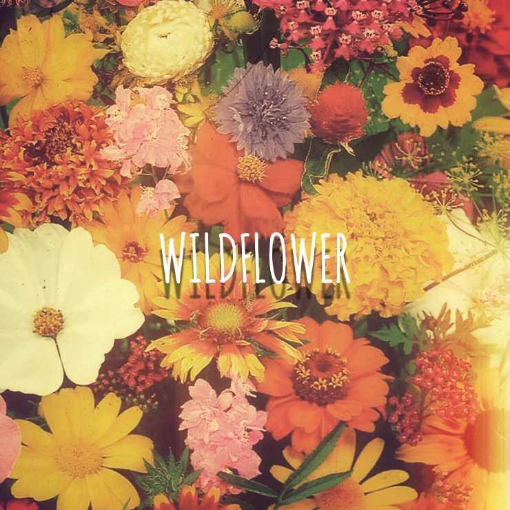 MIRAAGE - 'WILDFLOWER'