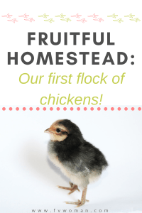 Fruitful Homestead: Our first flock of chickens!