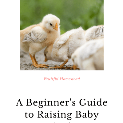A Beginner's Guide to Raising Baby Chicks