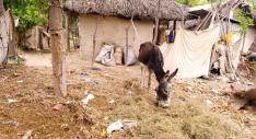 Aucun système de ramassage de poubelles n'existe à Anse-à-pitres.