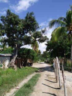 Un chemin traversant Anse-à-pitres.