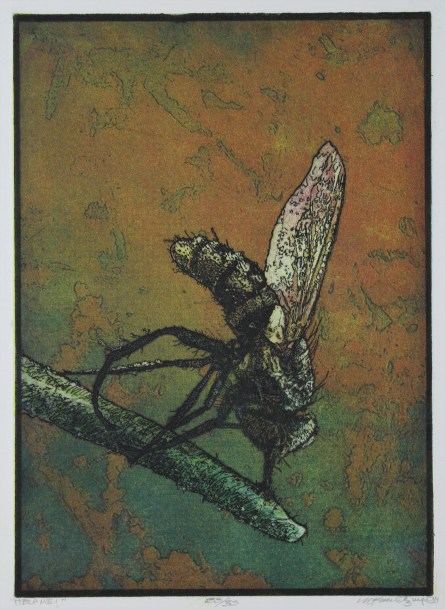 A print of an insect on a branch, with an abstracted map-like form in the background.