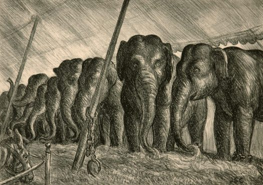 A lithograph, in black and greys, of 8 or 9 elephants standing in a row under a tent. In the left-hand corner is a goat in a pen. The elephants are eating from a pile of hay, raising their trunks.