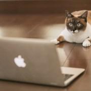 FX自動売買ランキングをみている猫