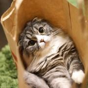 FXの袋へ飛び込んだ猫