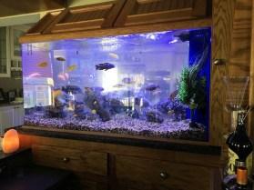 Custom Freshwater Aquarium