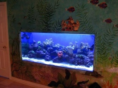 In Wall Reef Tank