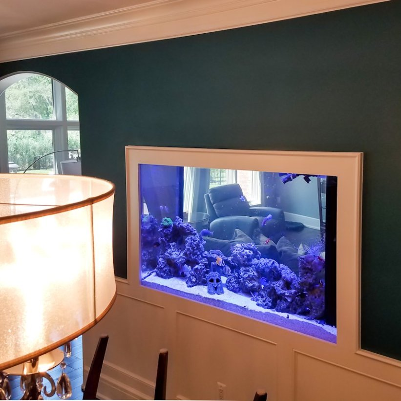 In-wall Room Divider Reef Tank
