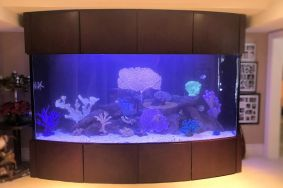 1000 Gallon Bow Front Fish Only Aquarium